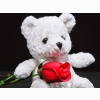 Funadress Teddy Bear Hd Wallpapers 34