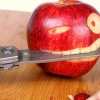 Download funny apple knife, funny apple knife  Wallpaper download for Desktop, PC, Laptop. funny apple knife HD Wallpapers, High Definition Quality Wallpapers of funny apple knife.