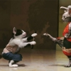 Download funny cat fistfight wallpapers, funny cat fistfight wallpapers  Wallpaper download for Desktop, PC, Laptop. funny cat fistfight wallpapers HD Wallpapers, High Definition Quality Wallpapers of funny cat fistfight wallpapers.