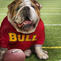 Funny Doggy Football Time Wallpaper