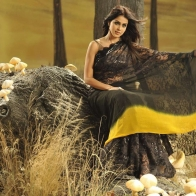Genelia Latest Saree
