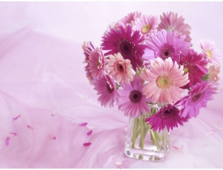 Gerbera Daisy Arrangement