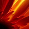 Download glowing flower, glowing flower  Wallpaper download for Desktop, PC, Laptop. glowing flower HD Wallpapers, High Definition Quality Wallpapers of glowing flower.