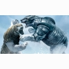 Golden Compass Bear Fight Wallpapers