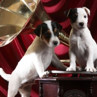 Gramophone Pups Wallpapers