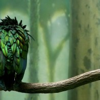 Green Colored Bird Wallpapers