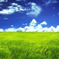 Green Grassland Wallpapers
