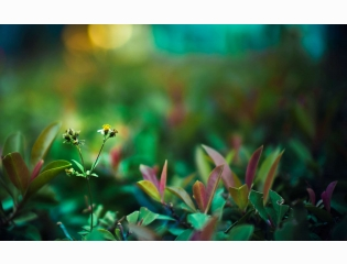 Green Life Wallpapers