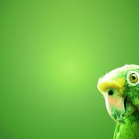 Green Parrot Wallpapers