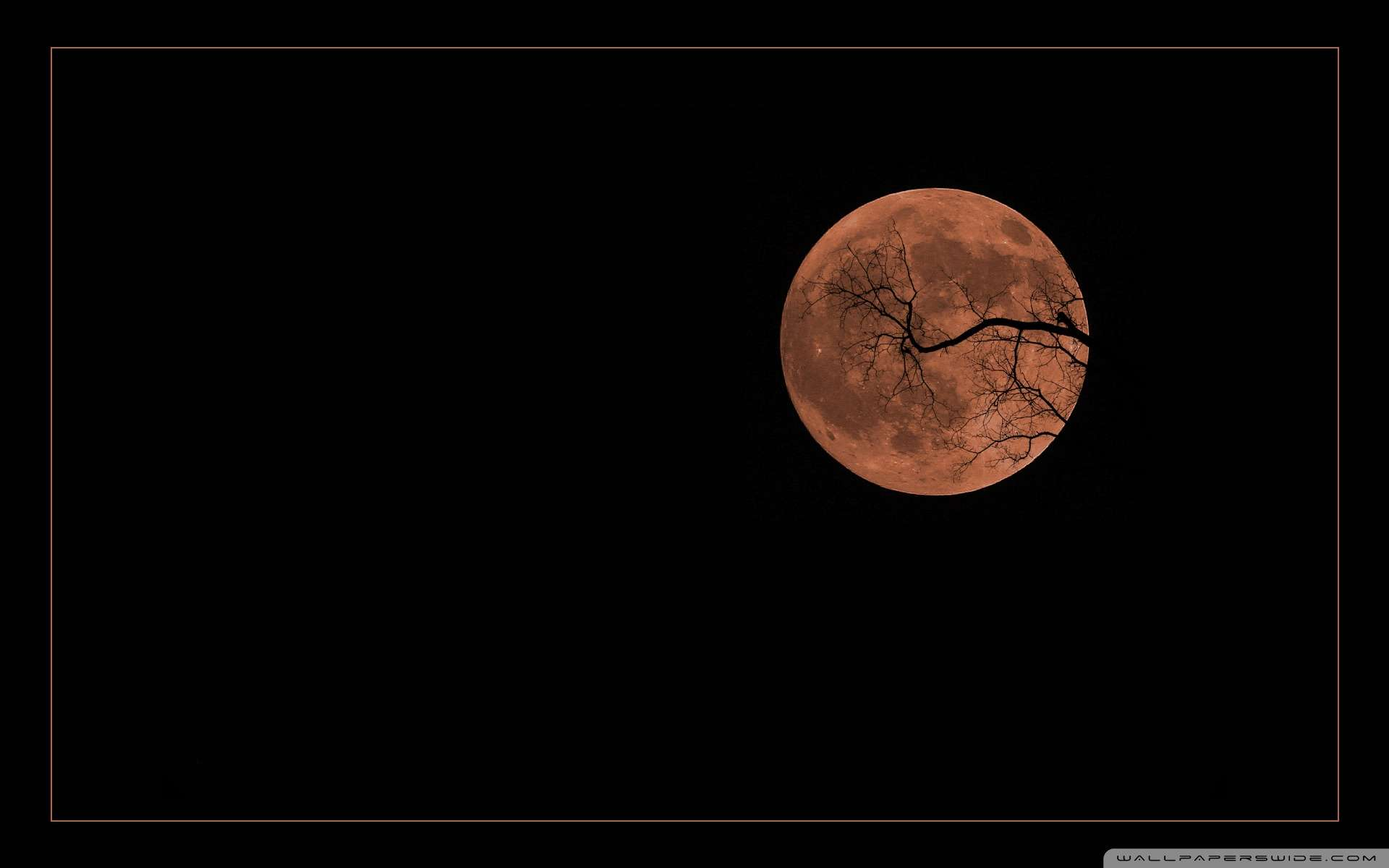 halloween moon wallpaper - photo #35