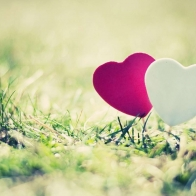 Happy Valentines Day Love Wallpapers 15