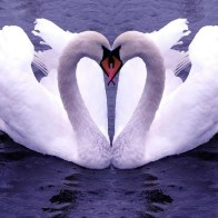 Happy Valentines Day Love Wallpapers 51