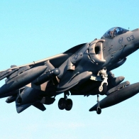 Harrier Hovers Wallpaper