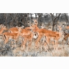 Herd Of Deer Wallpapers