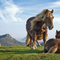 Hill Horses Wallpapers