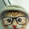 Download hipster kitten cover, hipster kitten cover  Wallpaper download for Desktop, PC, Laptop. hipster kitten cover HD Wallpapers, High Definition Quality Wallpapers of hipster kitten cover.