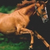 Download horse cover, horse cover  Wallpaper download for Desktop, PC, Laptop. horse cover HD Wallpapers, High Definition Quality Wallpapers of horse cover.