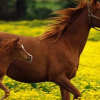 Download horses cover, horses cover  Wallpaper download for Desktop, PC, Laptop. horses cover HD Wallpapers, High Definition Quality Wallpapers of horses cover.