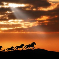Horses Wallpapers