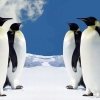 Download hq penguins wallpapers, hq penguins wallpapers Free Wallpaper download for Desktop, PC, Laptop. hq penguins wallpapers HD Wallpapers, High Definition Quality Wallpapers of hq penguins wallpapers.