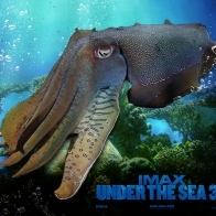 Imax Under The Sea 6 Wallpapers