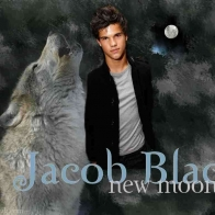 Jacob Black Werewolf Wallpaper