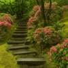 japanese garden washington park,nature landscape Wallpapers, nature landscape Wallpaper for Desktop, PC, Laptop. nature landscape Wallpapers HD Wallpapers, High Definition Quality Wallpapers of nature landscape Wallpapers.