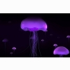 Jelly Fish 3d Wallpapers