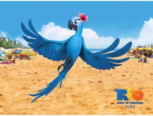 Jewel In Rio Movie Wallpapers