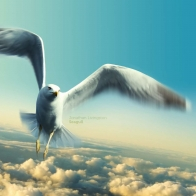 Jonathan Livingston Seagull Wallpapers
