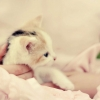Download kitten a girl, kitten a girl  Wallpaper download for Desktop, PC, Laptop. kitten a girl HD Wallpapers, High Definition Quality Wallpapers of kitten a girl.