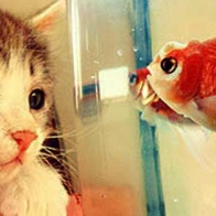 Kitten And Fish Cover