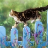 Download kitten balance wallpapers, kitten balance wallpapers Free Wallpaper download for Desktop, PC, Laptop. kitten balance wallpapers HD Wallpapers, High Definition Quality Wallpapers of kitten balance wallpapers.