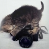 Download kitten pbeautifulorgraphy cover, kitten pbeautifulorgraphy cover  Wallpaper download for Desktop, PC, Laptop. kitten pbeautifulorgraphy cover HD Wallpapers, High Definition Quality Wallpapers of kitten pbeautifulorgraphy cover.