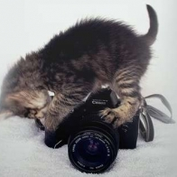 Kitten Photorgraphy Cover