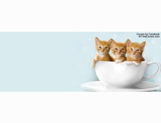 Kittens In A Cup Cover