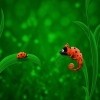 Download ladybug chameleon wallpapers, ladybug chameleon wallpapers Free Wallpaper download for Desktop, PC, Laptop. ladybug chameleon wallpapers HD Wallpapers, High Definition Quality Wallpapers of ladybug chameleon wallpapers.