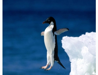Leap Of Faith Penguin Hd Wallpapers