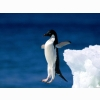 Leap Of Faith Penguin Wallpapers