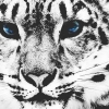 Download leopard cover, leopard cover  Wallpaper download for Desktop, PC, Laptop. leopard cover HD Wallpapers, High Definition Quality Wallpapers of leopard cover.