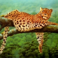Leoparden Leopard Wallpapers