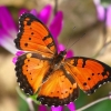 Download london butterfly house wallpapers, london butterfly house wallpapers Free Wallpaper download for Desktop, PC, Laptop. london butterfly house wallpapers HD Wallpapers, High Definition Quality Wallpapers of london butterfly house wallpapers.