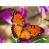 London Butterfly House Wallpapers
