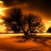 Download lonely tree cover, lonely tree cover  Wallpaper download for Desktop, PC, Laptop. lonely tree cover HD Wallpapers, High Definition Quality Wallpapers of lonely tree cover.
