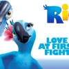 Download love at first fight rio wallpapers, love at first fight rio wallpapers Free Wallpaper download for Desktop, PC, Laptop. love at first fight rio wallpapers HD Wallpapers, High Definition Quality Wallpapers of love at first fight rio wallpapers.