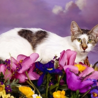 Lovely Cat Wallpapers