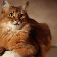 Mad Cat Hd Wallpapers