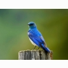 Mountain Blue Bird Hd Wallpapers