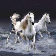 Mystic Horses Wallpapers