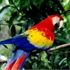 Download nature parrot wallpapers, nature parrot wallpapers Free Wallpaper download for Desktop, PC, Laptop. nature parrot wallpapers HD Wallpapers, High Definition Quality Wallpapers of nature parrot wallpapers.